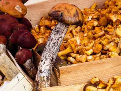paddenstoelen zink vegan