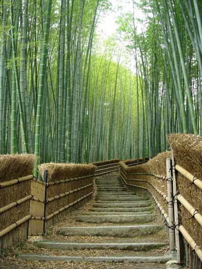 bamboe gebruik