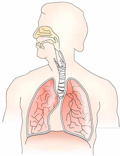 luchtwegen herstellen met kruiden