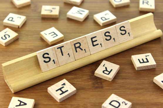 stress boswellia