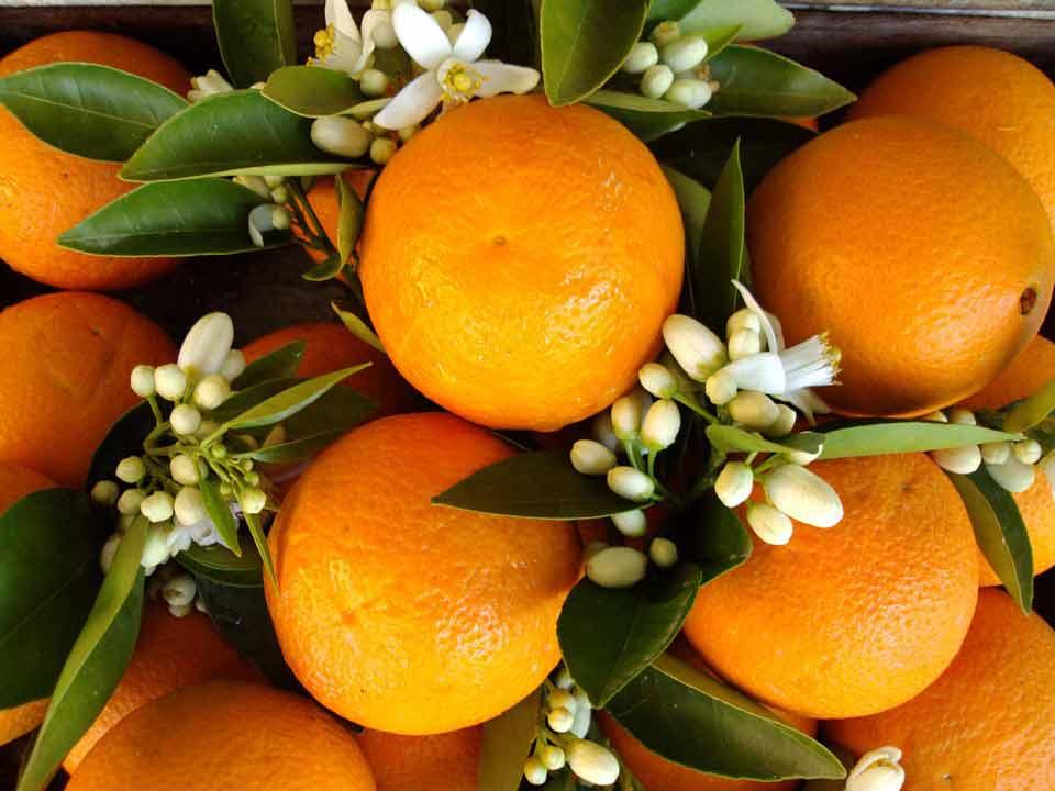 etherische sinaasappel olie