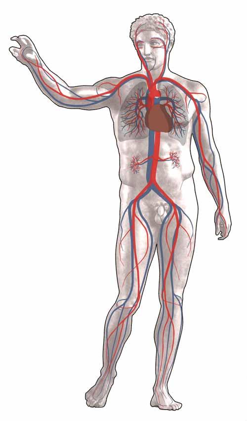 bloedsomloop verbeteren