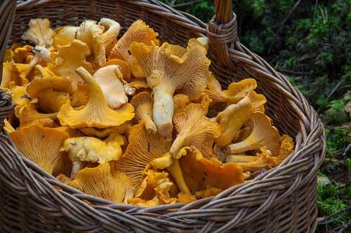 paddenstoelen vitamine d2