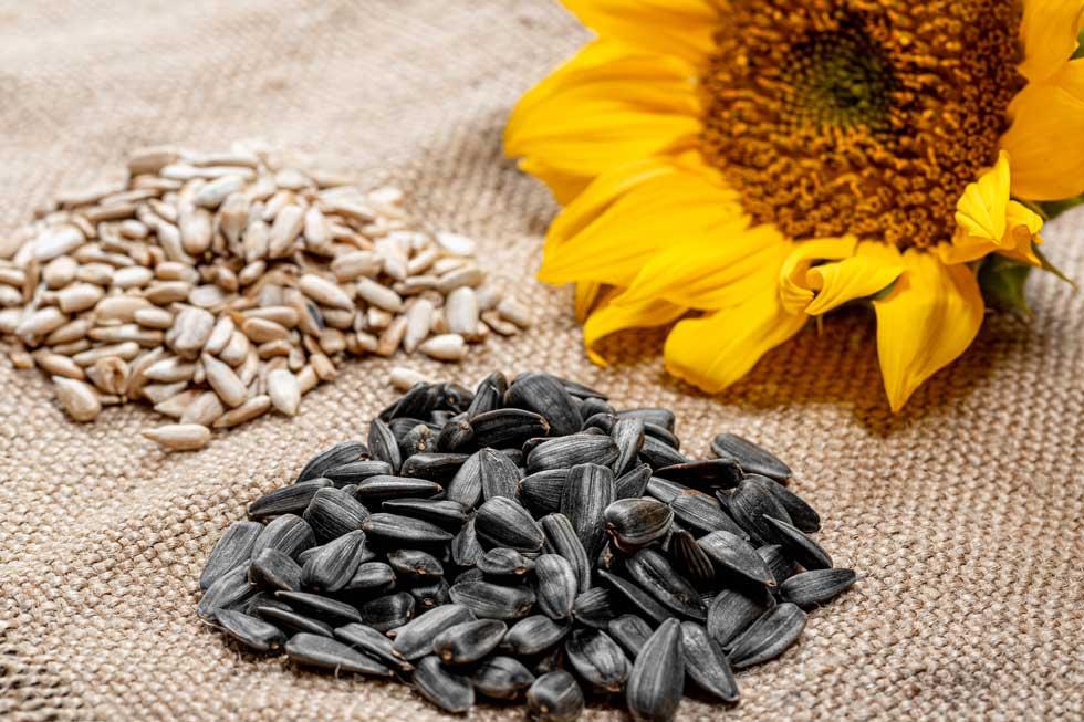 zonnebloempitten vitamine e